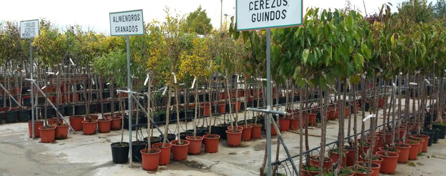 arboles en garden center campo grande valladolid